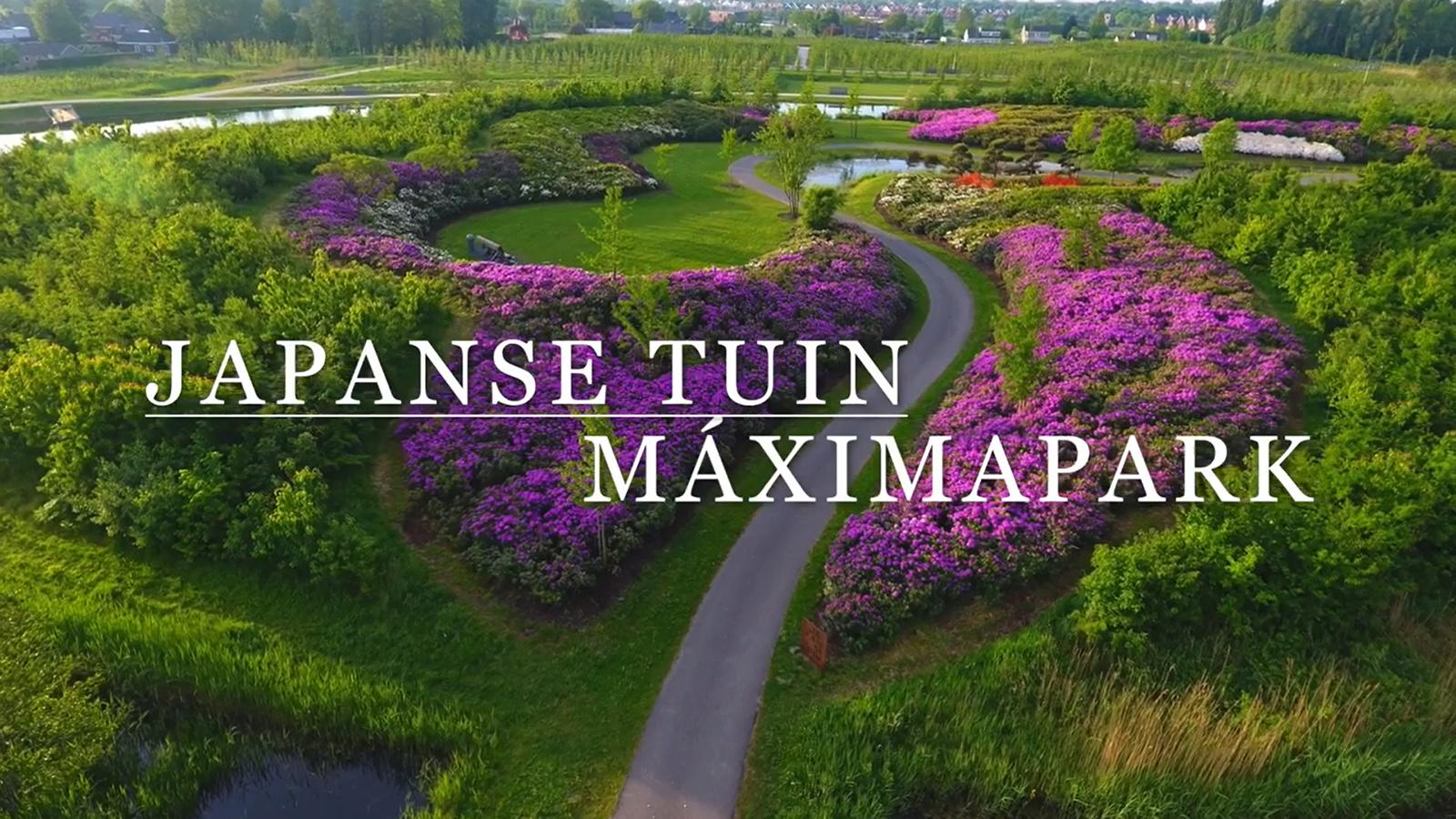 Natsumatsurietje in Japanse Tuin